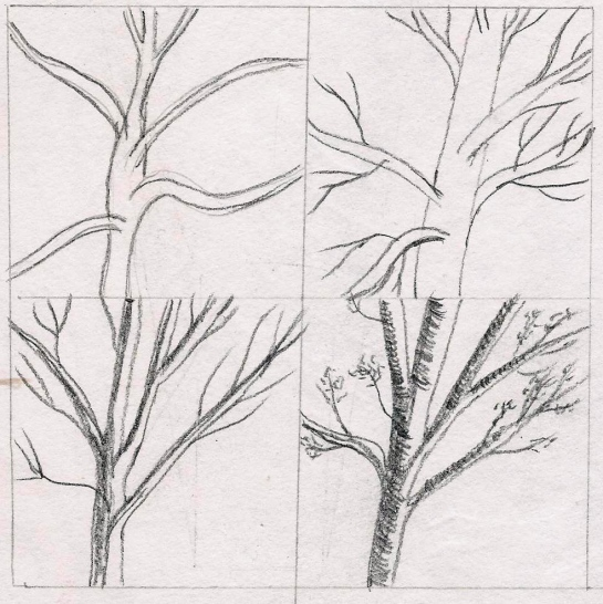 Drawing 1_drawing trees 1_page 98_101