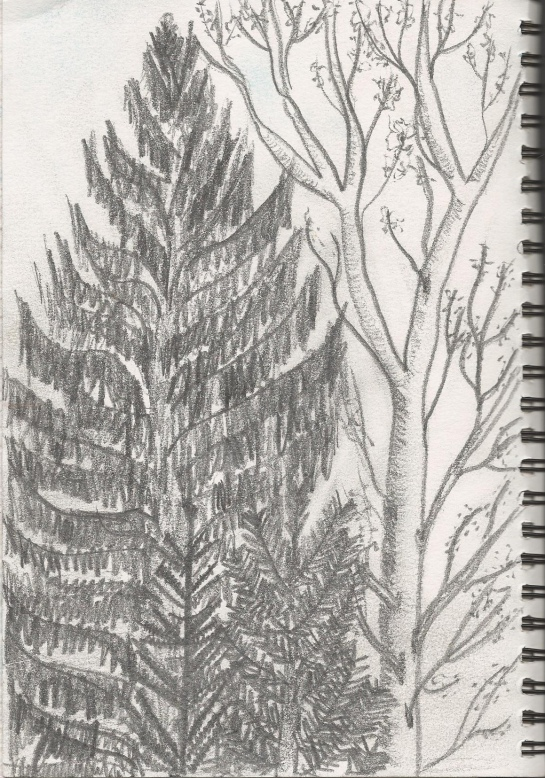 Drawing 1_drawing trees 2_page 98_101